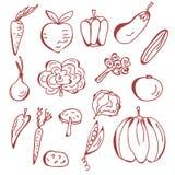 συρμένα λαχανικά σκίτσων χ&e Στοκ Εικόνα