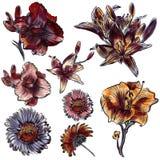 Συρμένα τα χέρι λουλούδια καθορισμένα το εκλεκτής ποιότητας ύφος watercolor Στοκ Εικόνες