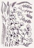 συρμένα φθινόπωρο φύλλα χ&epsilo Στοκ Φωτογραφίες