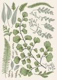 συρμένα φθινόπωρο φύλλα χ&epsilo Στοκ εικόνες με δικαίωμα ελεύθερης χρήσης