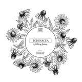 Συρμένα χέρι άγρια λουλούδια σανού Λουλούδι Echinacea Ιατρικό χορτάρι Χαραγμένη τρύγος τέχνη Στρογγυλή σύνθεση Αγαθό για τα καλλυ Στοκ Φωτογραφίες