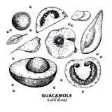 Συρμένα χέρι αβοκάντο, ντομάτα και σκόρδο Συστατικά εμβύθισης Guacamole Χαραγμένα διάνυσμα μαγειρεύοντας εικονίδια Μεξικάνικος πα Στοκ φωτογραφία με δικαίωμα ελεύθερης χρήσης