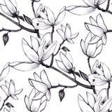 Συρμένα χέρι λουλούδια magnolia σχεδίων άνευ ραφής στο άσπρο υπόβαθρο ελεύθερη απεικόνιση δικαιώματος