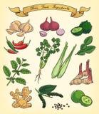 Συρμένα χέρι ταϊλανδικά συστατικά τροφίμων Στοκ Εικόνες