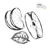 Συρμένα χέρι τεμαχισμένα μήλα Χαραγμένη διάνυσμα απεικόνιση Juicy φυσικά φρούτα Υγιές συστατικό τροφίμων Για το μαγείρεμα Στοκ Εικόνες