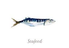 Συρμένα χέρι ψάρια Watercolor φρέσκια απεικόνιση θαλασσινών στο άσπρο υπόβαθρο Στοκ φωτογραφία με δικαίωμα ελεύθερης χρήσης