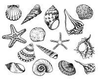 Συρμένες χέρι διανυσματικές απεικονίσεις - συλλογή των θαλασσινών κοχυλιών Θαλάσσιο σύνολο Τελειοποιήστε για τις προσκλήσεις, ευχ διανυσματική απεικόνιση