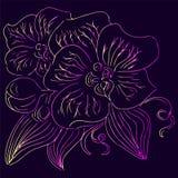 Συρμένες χέρι διανυσματικές απεικονίσεις του αφηρημένου λουλουδιού ορχιδεών με τα ιώδη, κίτρινα και ρόδινα χρώματα r στοκ φωτογραφία με δικαίωμα ελεύθερης χρήσης