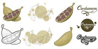 Συρμένες χέρι εγκαταστάσεις καρδάμωμων, πικάντικο συστατικό, λογότυπο καρδάμωμων, υγιής οργανική τροφή, καρδάμωμο καρυκευμάτων πο στοκ εικόνα με δικαίωμα ελεύθερης χρήσης