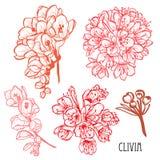 Συρμένες χέρι floral διακοσμήσεις Απεικόνιση αποθεμάτων