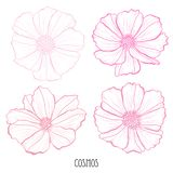 Συρμένες χέρι floral διακοσμήσεις Διανυσματική απεικόνιση