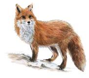 συρμένη αλεπού Στοκ Εικόνες