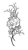 Συρμένη η χέρι ομάδα peony αυξήθηκε λουλούδι για διακοσμεί Στοκ εικόνες με δικαίωμα ελεύθερης χρήσης