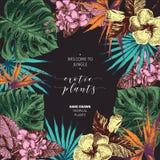 Συρμένη τροπική αφίσα εγκαταστάσεων Vecotr χέρι Εξωτικά χαραγμένα φύλλα και λουλούδια Monstera, φύλλα φοινικών livistona, birdof Στοκ φωτογραφία με δικαίωμα ελεύθερης χρήσης