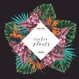 Συρμένη τροπική αφίσα εγκαταστάσεων Vecotr χέρι Εξωτικά χαραγμένα φύλλα και λουλούδια Monstera, φύλλα φοινικών livistona, birdof απεικόνιση αποθεμάτων