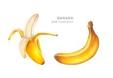 Συρμένη χέρι απεικόνιση ράστερ μπανανών καθορισμένη Στοκ φωτογραφία με δικαίωμα ελεύθερης χρήσης