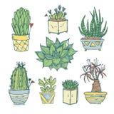 Συρμένη χέρι απεικόνιση - σύνολο χαριτωμένου κάκτου και succulents ελεύθερη απεικόνιση δικαιώματος