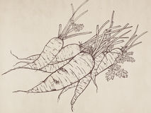Συρμένη χέρι απεικόνιση του καρότου Στοκ εικόνα με δικαίωμα ελεύθερης χρήσης