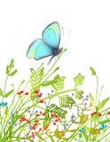 Συρμένη χέρι λεπτή μπλε συνεδρίαση πεταλούδων επάνω Στοκ φωτογραφίες με δικαίωμα ελεύθερης χρήσης