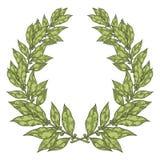 Συρμένη χέρι διανυσματική απεικόνιση φύλλων Green Bay δαφνών Εκλεκτής ποιότητας διακοσμητικό στεφάνι δαφνών απεικόνιση αποθεμάτων