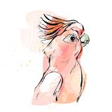 Συρμένη χέρι διανυσματική αφηρημένη δημιουργική απεικόνιση παπαγάλων κολάζ τροπική με την ελεύθερη σύσταση στα ρόδινα χρώματα κρη Στοκ φωτογραφία με δικαίωμα ελεύθερης χρήσης