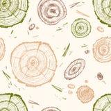 Συρμένη χέρι διανυσματική ξύλινη φέτα baikal ανασκόπησης δέντρο πεύκων λιμνών Οργανικό σύγχρονο ecolog ελεύθερη απεικόνιση δικαιώματος