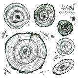 Συρμένη χέρι διανυσματική ξύλινη φέτα baikal ανασκόπησης δέντρο πεύκων λιμνών διανυσματική απεικόνιση