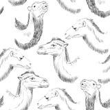 Συρμένη χέρι καμήλα Στοκ Εικόνες