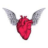 Συρμένη χέρι κομψή κόκκινη καρδιά με τα φτερά, σκίτσο για το desi δερματοστιξιών διανυσματική απεικόνιση