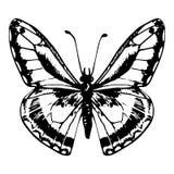 Συρμένη χέρι πεταλούδα Στοκ φωτογραφία με δικαίωμα ελεύθερης χρήσης