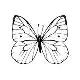 Συρμένη χέρι πεταλούδα Στοκ Εικόνες