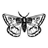 Συρμένη χέρι πεταλούδα Στοκ εικόνα με δικαίωμα ελεύθερης χρήσης