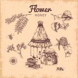Συρμένη χέρι σύνθεση μελιού λουλουδιών απεικόνιση αποθεμάτων