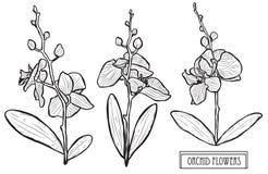 Συρμένη χέρι floral διακόσμηση απεικόνιση αποθεμάτων