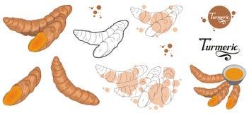 Συρμένη χέρι turmeric ρίζα, πικάντικο συστατικό, turmeric λογότυπο, υγιής οργανική τροφή, turmeric καρυκευμάτων που απομονώνεται  στοκ φωτογραφία