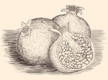 Συρμένοι χέρι γρανάτες Στοκ εικόνα με δικαίωμα ελεύθερης χρήσης