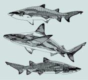 Συρμένοι χέρι καρχαρίες διάνυσμα Στοκ Εικόνα