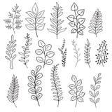 Συρμένοι χέρι κλάδοι με τα φύλλα και τα λουλούδια Αγροτική διανυσματική διακλαδιμένος διακόσμηση doodle που απομονώνεται ελεύθερη απεικόνιση δικαιώματος