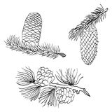 Συρμένοι χέρι κώνοι και αγριόπευκο πεύκων Κώνοι πεύκων σκίτσων που απομονώνονται στο λευκό Στοκ εικόνα με δικαίωμα ελεύθερης χρήσης