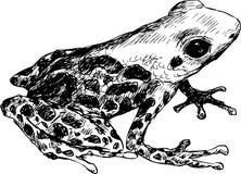 Συρμένος χέρι χαριτωμένος βάτραχος Στοκ Φωτογραφία