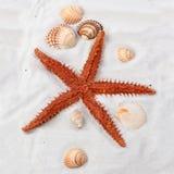 συρμένος χεριών τρύγος ύφους αστεριών θάλασσας απεικόνισης αρχικός Στοκ εικόνα με δικαίωμα ελεύθερης χρήσης