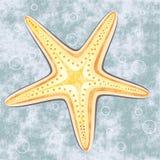 συρμένος χεριών τρύγος ύφους αστεριών θάλασσας απεικόνισης αρχικός Στοκ Εικόνα