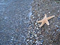 συρμένος χεριών τρύγος ύφους αστεριών θάλασσας απεικόνισης αρχικός στοκ φωτογραφία με δικαίωμα ελεύθερης χρήσης