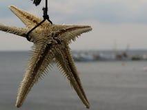συρμένος χεριών τρύγος ύφους αστεριών θάλασσας απεικόνισης αρχικός Στοκ Εικόνες