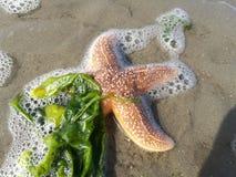 συρμένος χεριών τρύγος ύφους αστεριών θάλασσας απεικόνισης αρχικός Στοκ φωτογραφίες με δικαίωμα ελεύθερης χρήσης