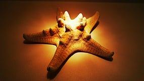 συρμένος χεριών τρύγος ύφους αστεριών θάλασσας απεικόνισης αρχικός Στοκ Φωτογραφίες