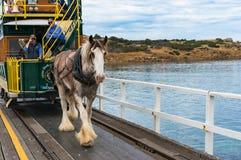 Συρμένο άλογο τραμ στον τρόπο στο νησί γρανίτη Στοκ Εικόνες