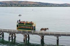 Συρμένο άλογο τραμ στον τρόπο στο νησί γρανίτη Στοκ Εικόνα