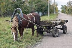 συρμένο άλογο Στοκ Φωτογραφία