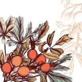 συρμένο ανασκόπηση floral χέρι Στοκ Φωτογραφίες